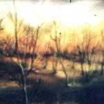 53. Šuma, ulje-staklo, 15x20, 1988.